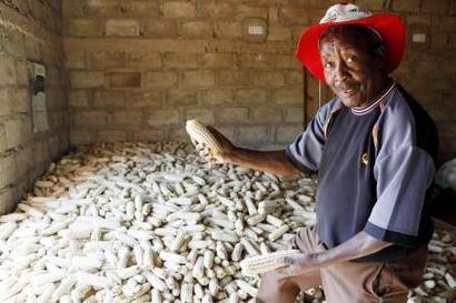 maize-yield1